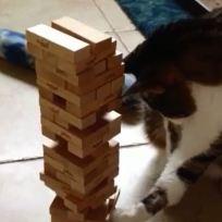 Jenga-cat