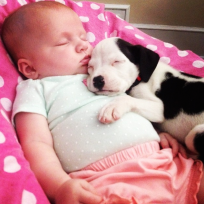 Baby and Pit Bull Photos: Adorable BFFs!