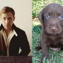 Ryan gosling vs puppy