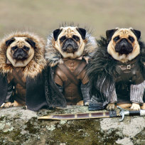 Dogs-dress-like-game-of-thrones-characters_robb-stark-ned-stark-and-jon-snow