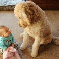Baby vs dog