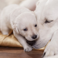 17-photos-of-dogs-acting-as-parents_listen-up-son