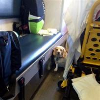 Dog on ambulance
