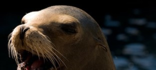 Perez Hilton: Save the Seals! Give Me Attention!
