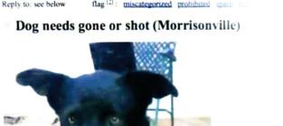 Dog craigs list ad