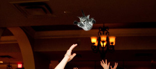 Bride throwing cat meme 7