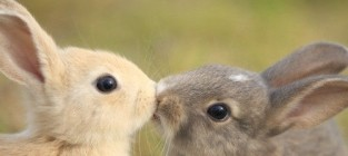 17 Adorable Photos of Animals Kissing
