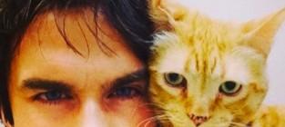 Ian somerhalder cat