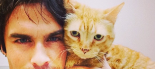 13 celebrities who really love their cats ian somerhalder