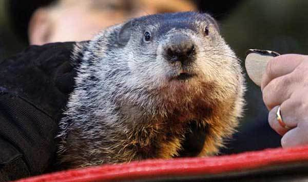 Punxsutawney Phil Photograph