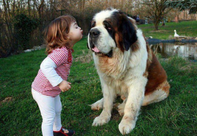 Giant Dog, Small Owner