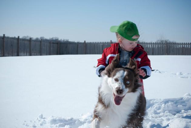 Snowy Photobomb
