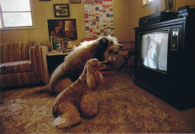 Dogs Watch Dog