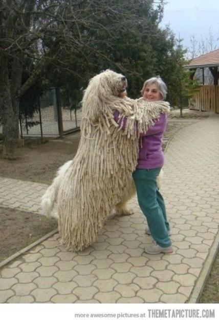 Mop? Dog?
