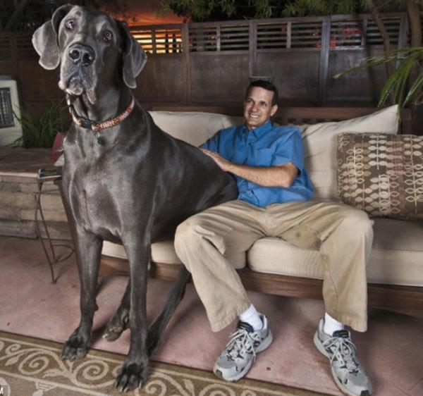 Great Big Dog