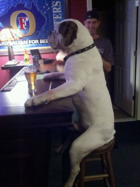 This Dog Walks Into a Bar...