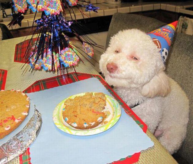 Happy Birthdog