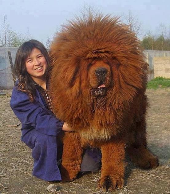 Lion-Like
