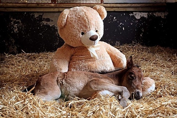 A Foal and His Friend