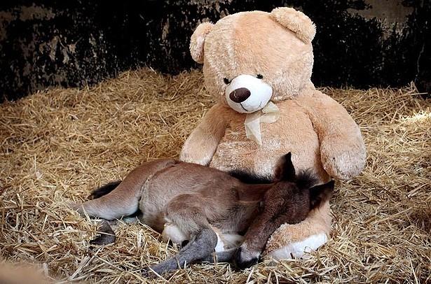 Asleep on His Friend