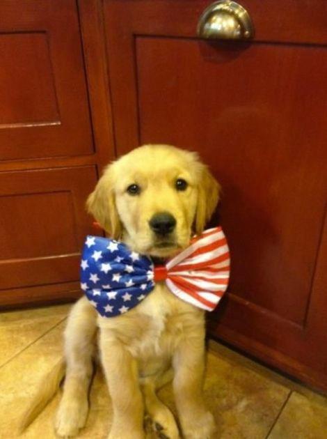 Patriotic dogs.