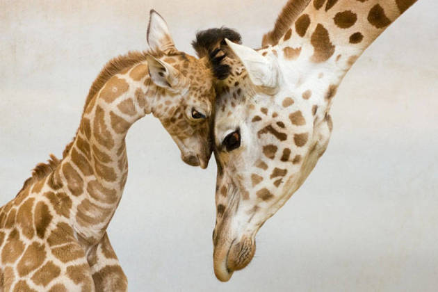 Different Kind of Necking