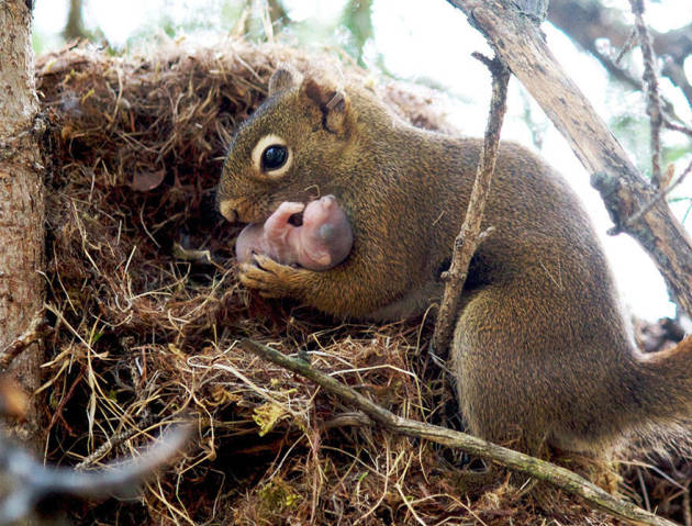 A Newborn Squirrel