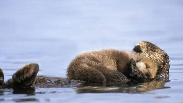 Otter-ly Adorable