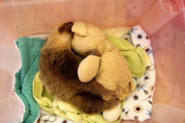 A sloth and a stuffed animal.