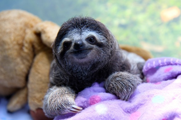 Is this sloth smiling?