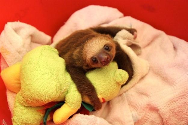Cuddling right up.