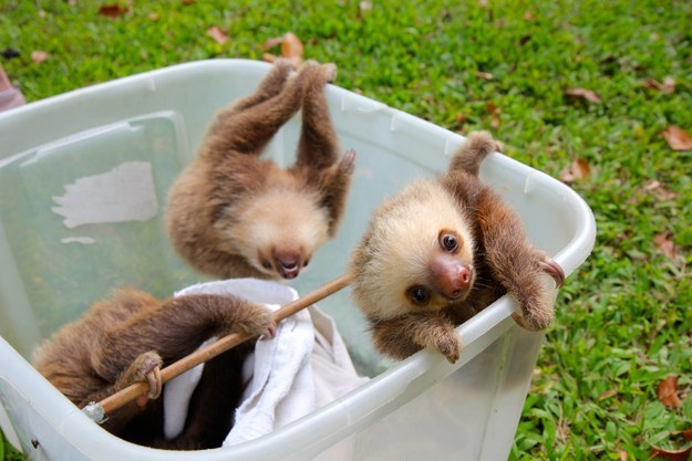 Playing in their bucket.