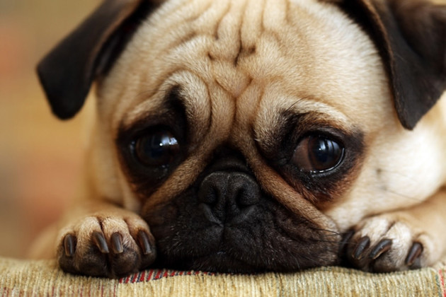 Saddest. Eyes. Ever.