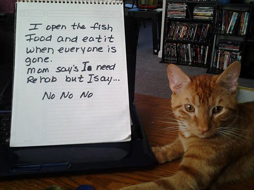 No rehab!
