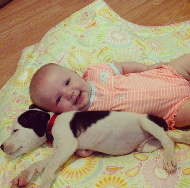 Happy Baby, Sleeping Puppy