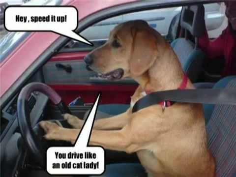 Ruff Road Rage