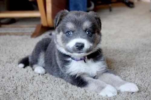 Black, white and cute
