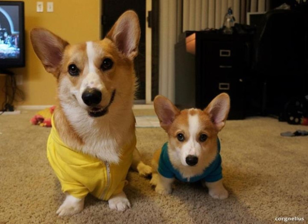 Corgnelius and Stumphrey
