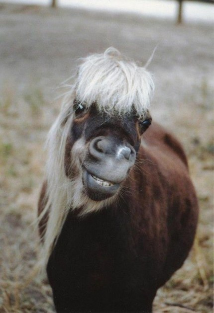 A smiling horse.