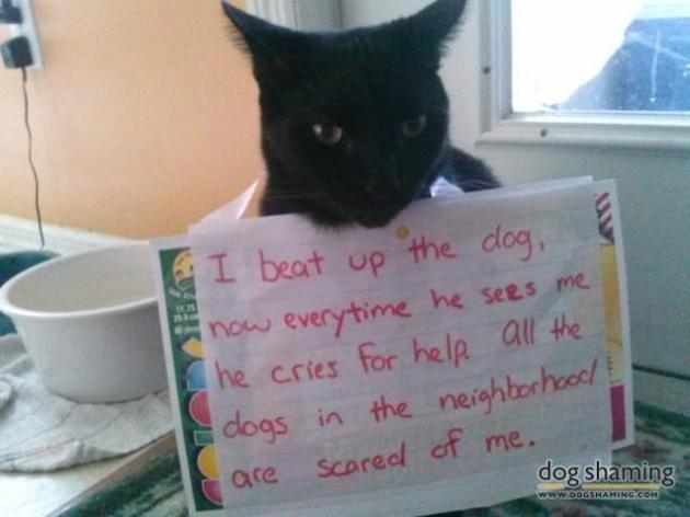 I frighten dogs.