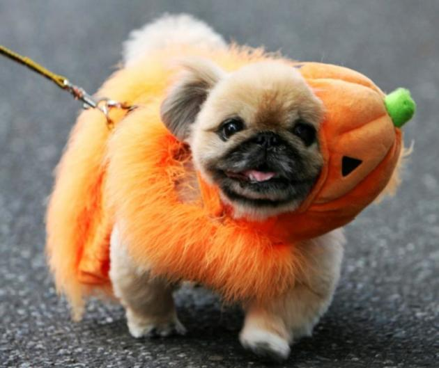 No Halloween costume!