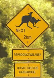 Kangaroo Sex