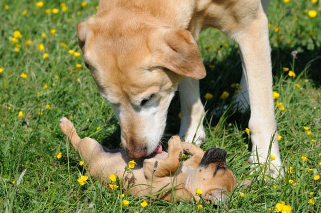 Tummy kisses!!!