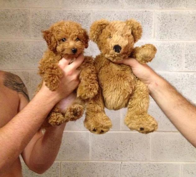 A doggy bear