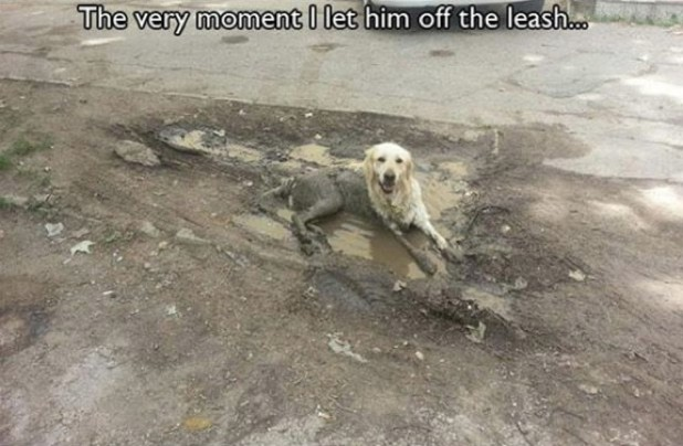 14 Photos of Dogs Acting as Man's Most Frustrating Friend