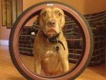 Dog Balances Tire