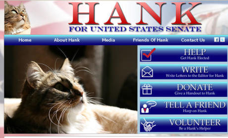 Hank the Cat: Running For U.S. Senate, Leading Democratic Candidate in Facebook Support