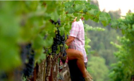 Teresa & Joe in the Vineyard