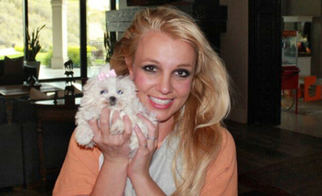 Britney Spears' Dog Makes Twitter Debut