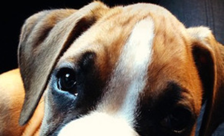 Lamar and Khloe Puppy: SO Cute!
